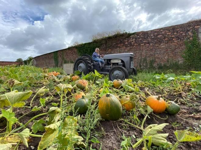 dunham pumpkin patch