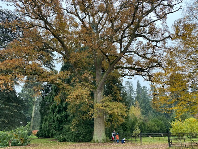 harcourt arboretum, autumn family walks oxfordshire, outdoor walks with kids