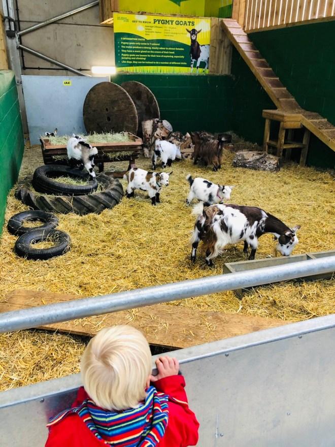 petting farm surrey, petting zoo surrey