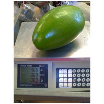 A JUMBO 4 lb avocado!