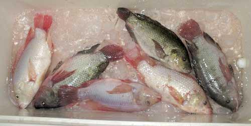 Sleeps wit' da fishes