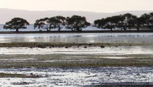 Mudflats and seagrass near Toondah Harbour