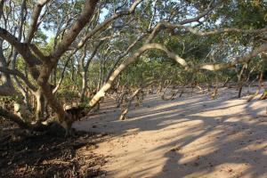 Mangroves of Moreton Bay