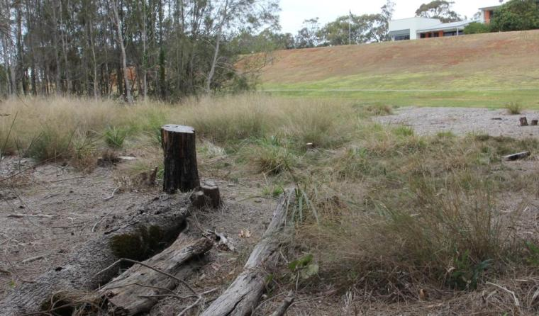 View from the felled tree's perspective 15 months after the illegal clearing by Redland City Council 028 comp.jpg