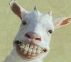 GoatBraces113009-thumb-320x274-11505