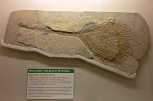 Fossilized palm leaf (approximately 40 million years old)