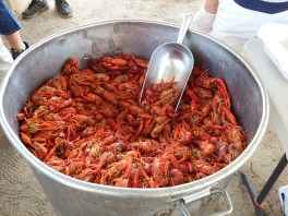 Louisiana Crawfish Boil Redneck Lifestyle Crayfish 1
