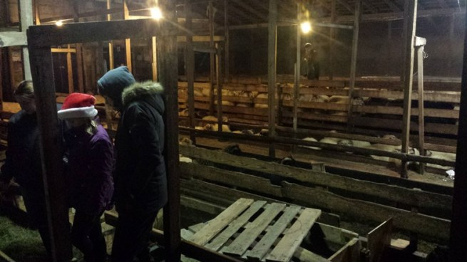 345-sheep-barn
