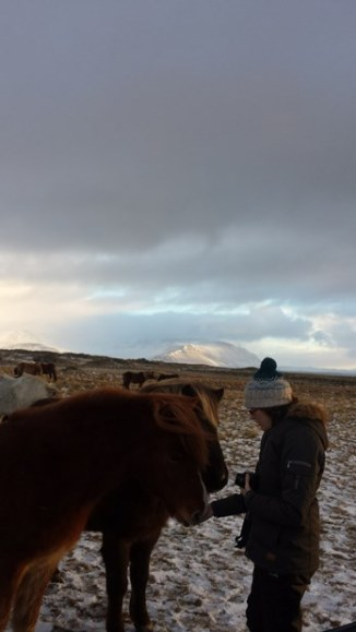 378-more-horses