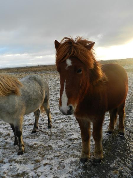 388-more-horses
