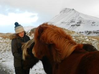 389-more-horses
