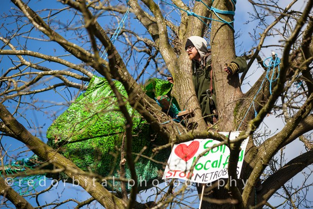 Photograph shortlisted for the Environmental Photographer of the Year - a protester looks out from a tree-top camp.