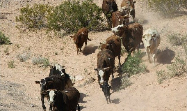 What the Networks Aren't Telling You About the Nevada Cattle Battle