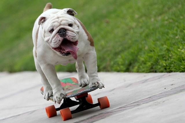 dog-tricks2.jpg