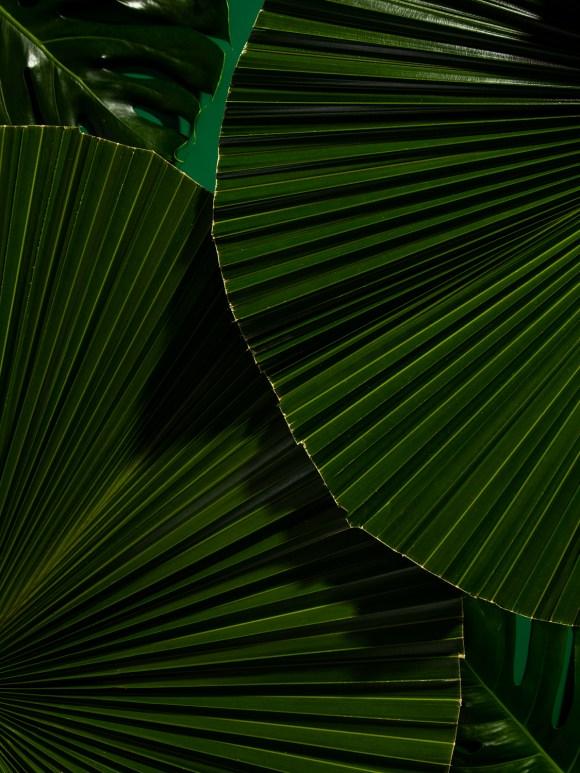 Print Gif, Cinemagraph, Stop Motion feito para a Cia maritima, Folhas verdes em fundo verde