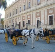 Seville (33)