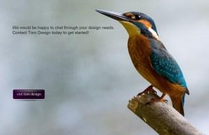 Toro Design - web and graphic design.