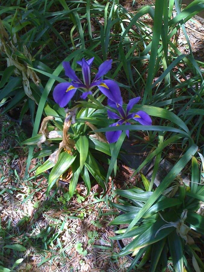 RRPJ-ETC Flowers1-17Mar1.JPG