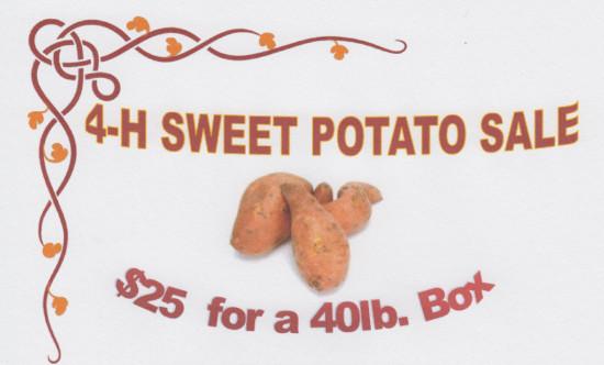 RRPJ-4-H Sweet Potatoes-17Sep15