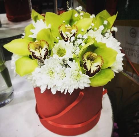 Zelene orhideje u bordo kutiji