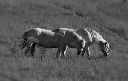 Horses crop