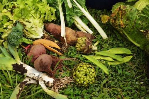 cosecha red de guardianes de semillas ecuador permacultura agroecologia organico