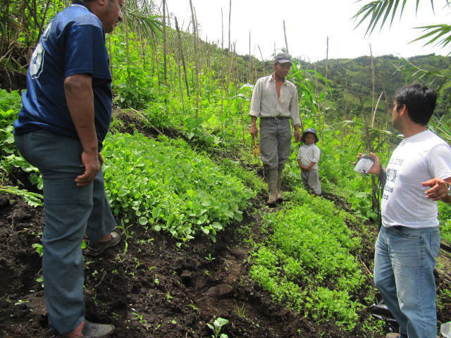 rentabilidad allpa revista agroecologia ecuador