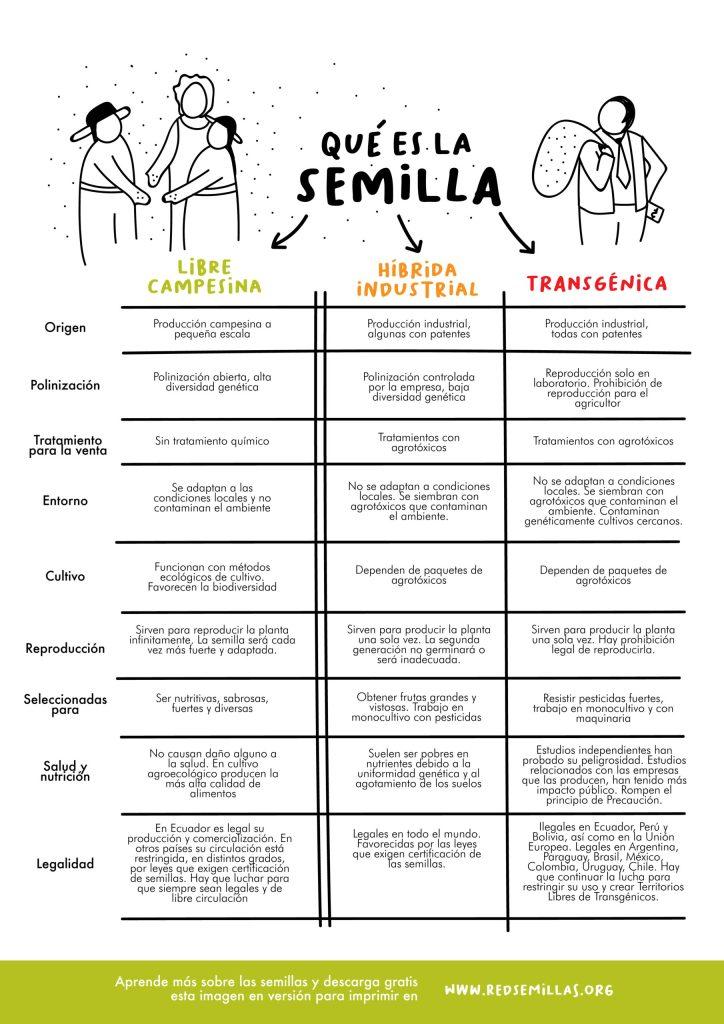 diferencia-entre-semilla campesina organica hibrida transgenica