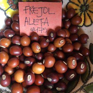 fréjol aleta Red Guardianes de Semillas Ecuador