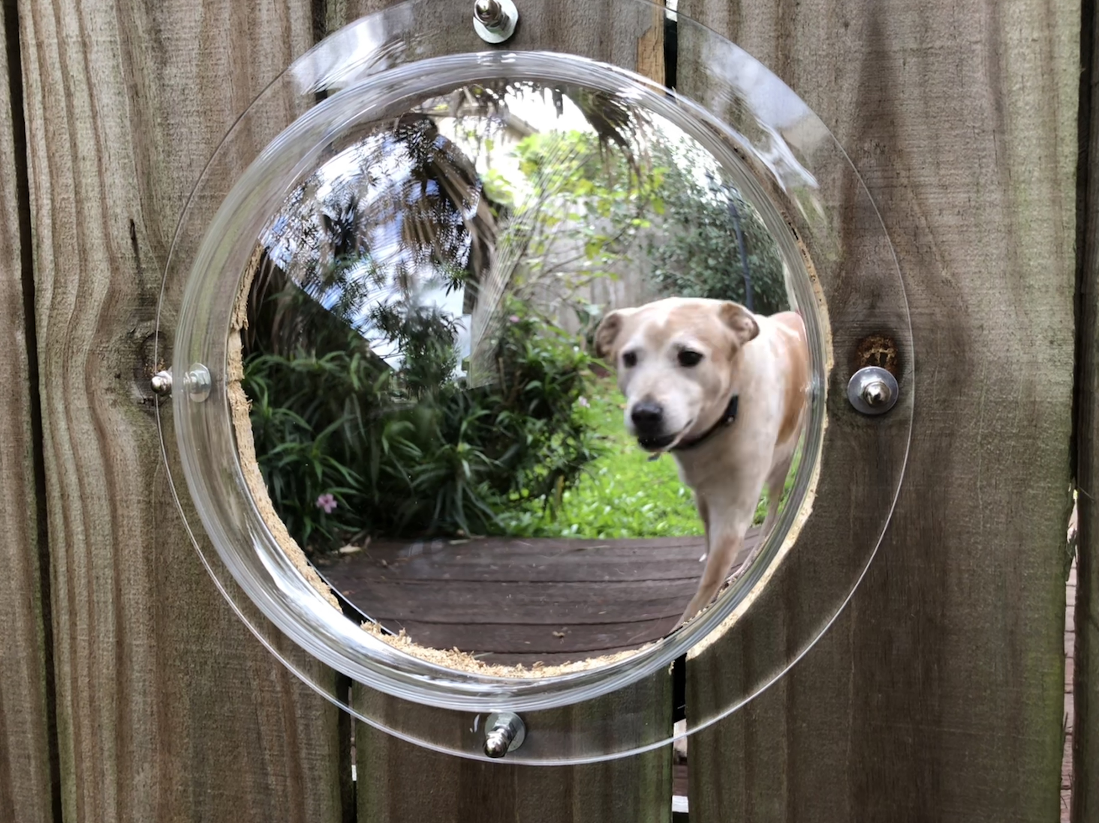 Doggie Fence Porthole For The Win Red Shoes Red Wine