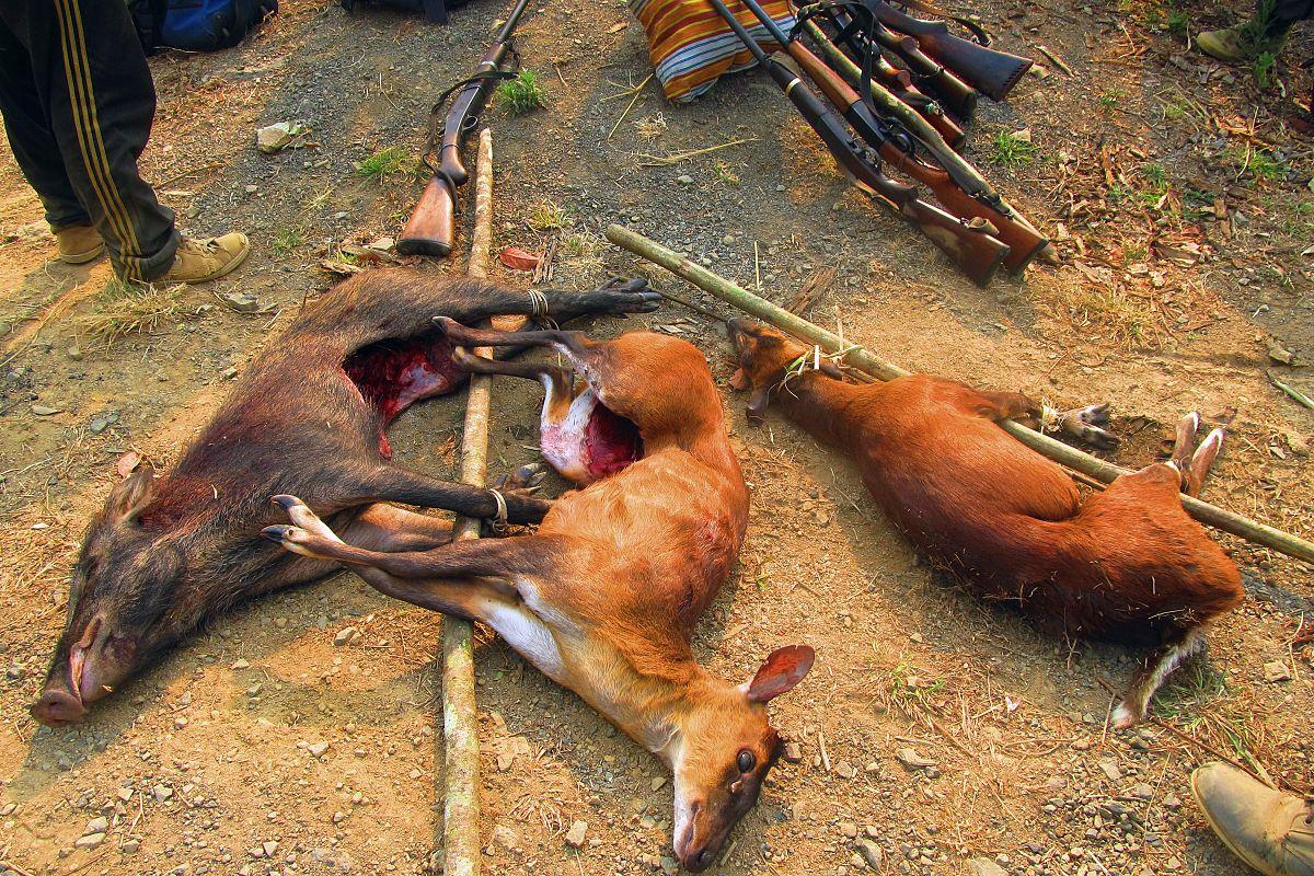 Kết quả hình ảnh cho vì sao không ăn thịt thú rừng