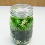 Here S How To Make A Mini Dinosaur Terrarium In A Mason Jar