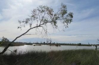 Reedy lakes wetlands walk