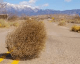 Waiting for recruitment responses is like watching tumbleweed 1