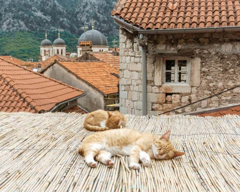 The cats of Kotor sleeping in Old Town.