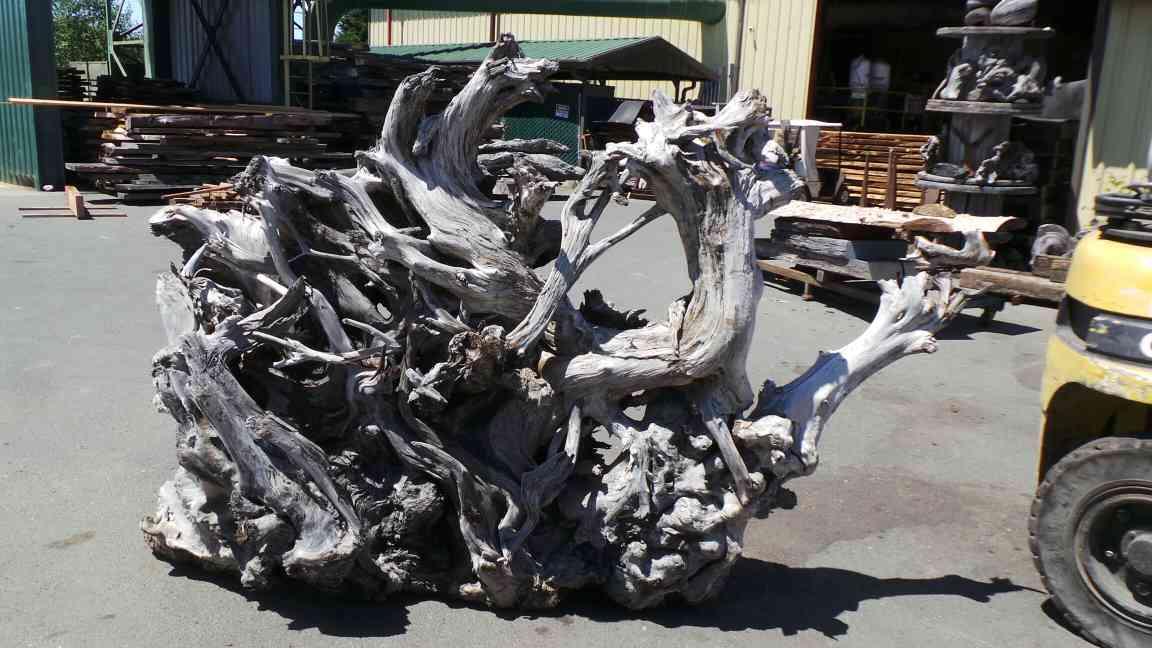 Redwood Roots Driftwood Art Ideas