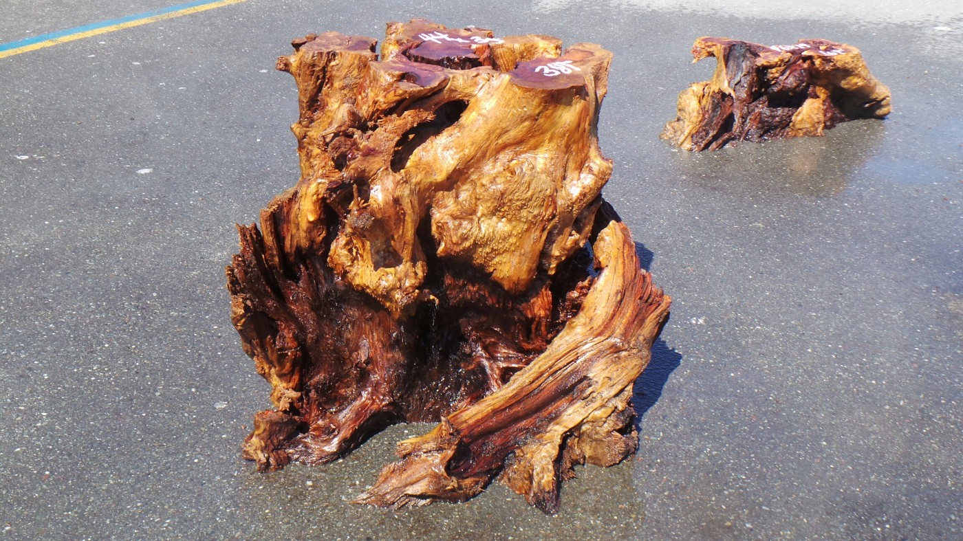 Contrasted Red Burl Tree Stump Base