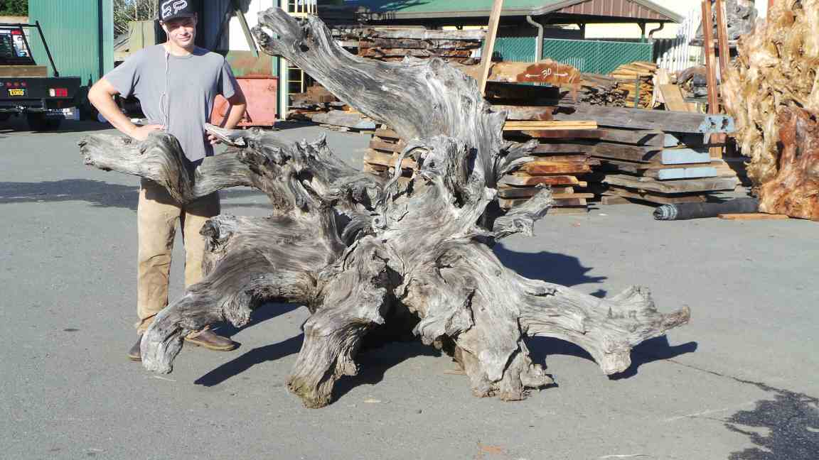 Raw Tree Landscaping - Dead Tree Stump Decor