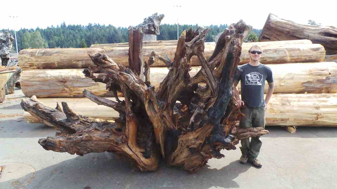 Redwood landscape piece - Yard decoration