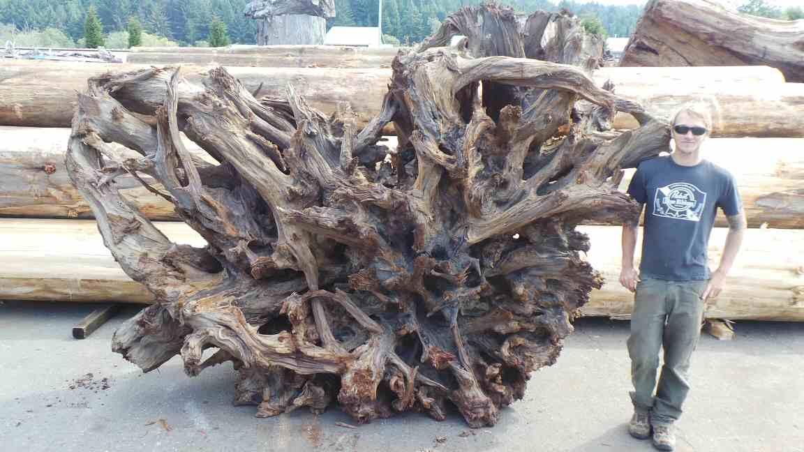 Wood Root System Landscape