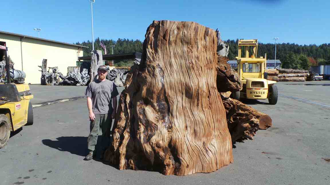 Large Redwood Stump for Large Wooden Sculpture