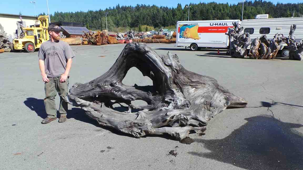 Redwood Large Decorative Driftwood Piece