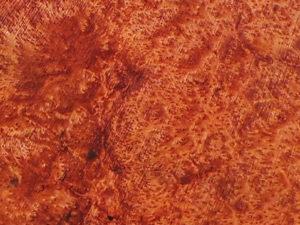 Example of Redwood Burl Grain