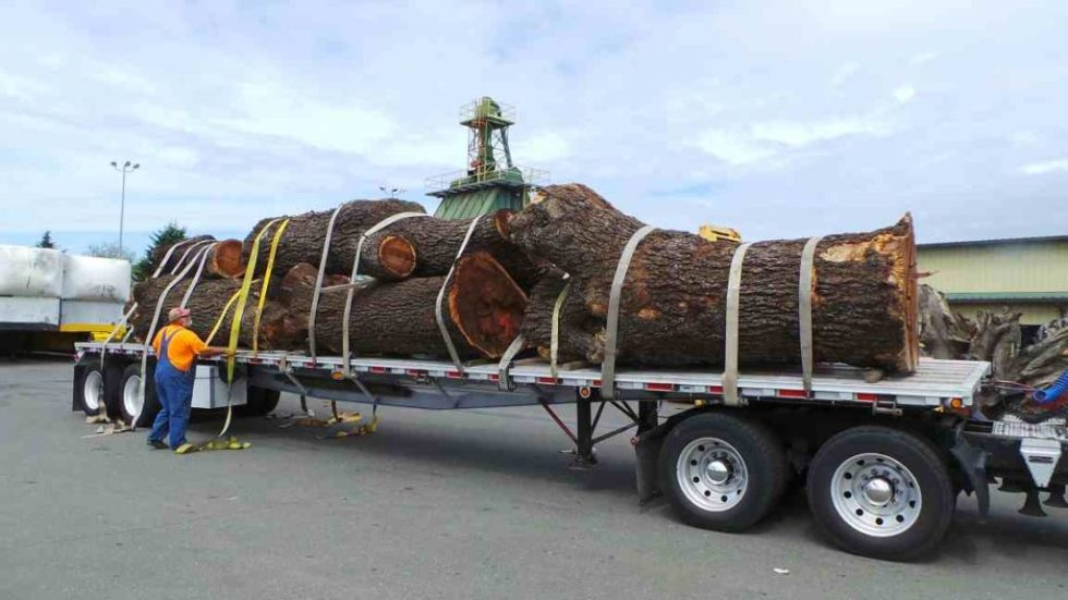 Multiple tree stumps strapped to trailer