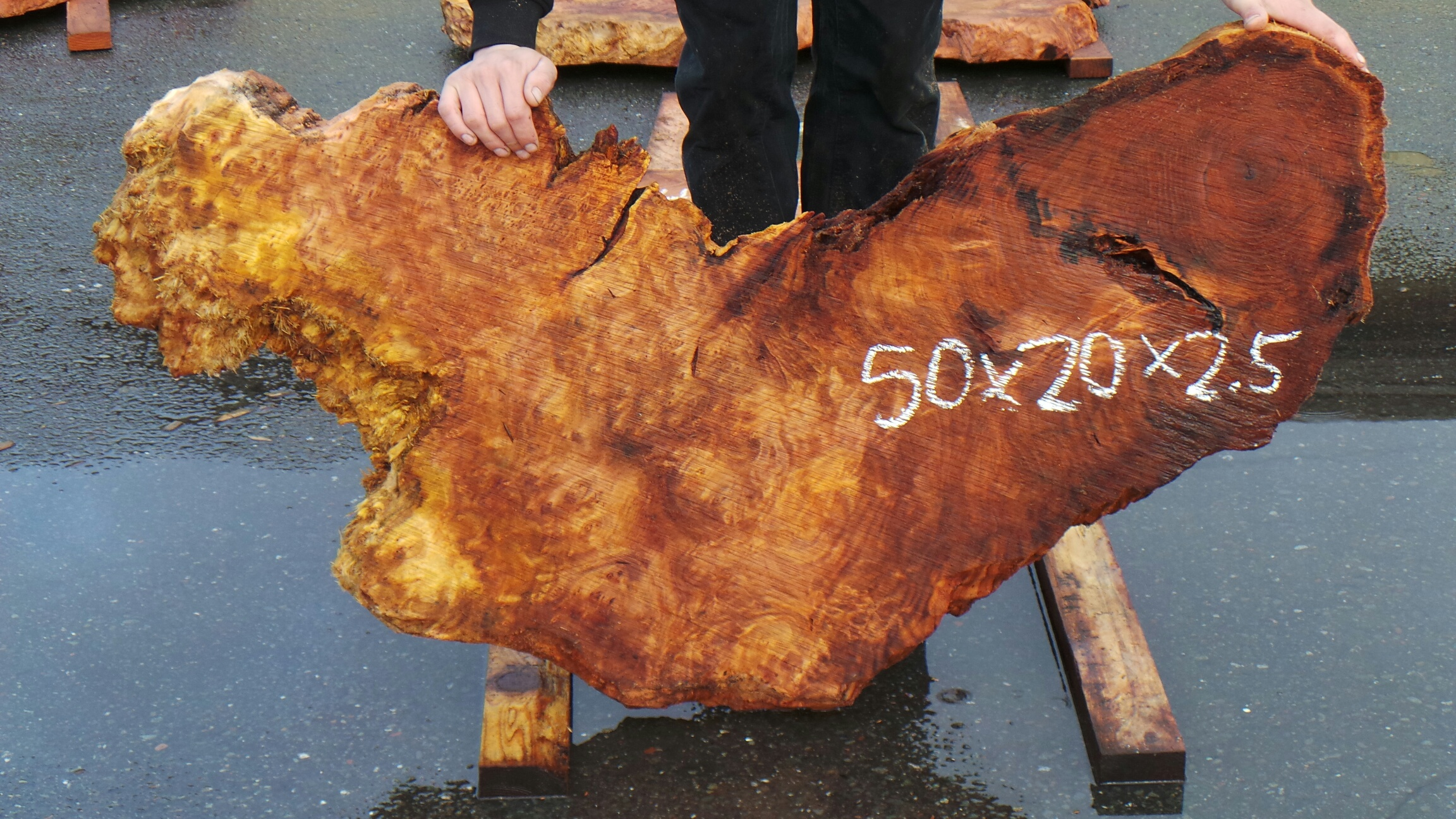Lace Burl Redwood Tree Burl Slab