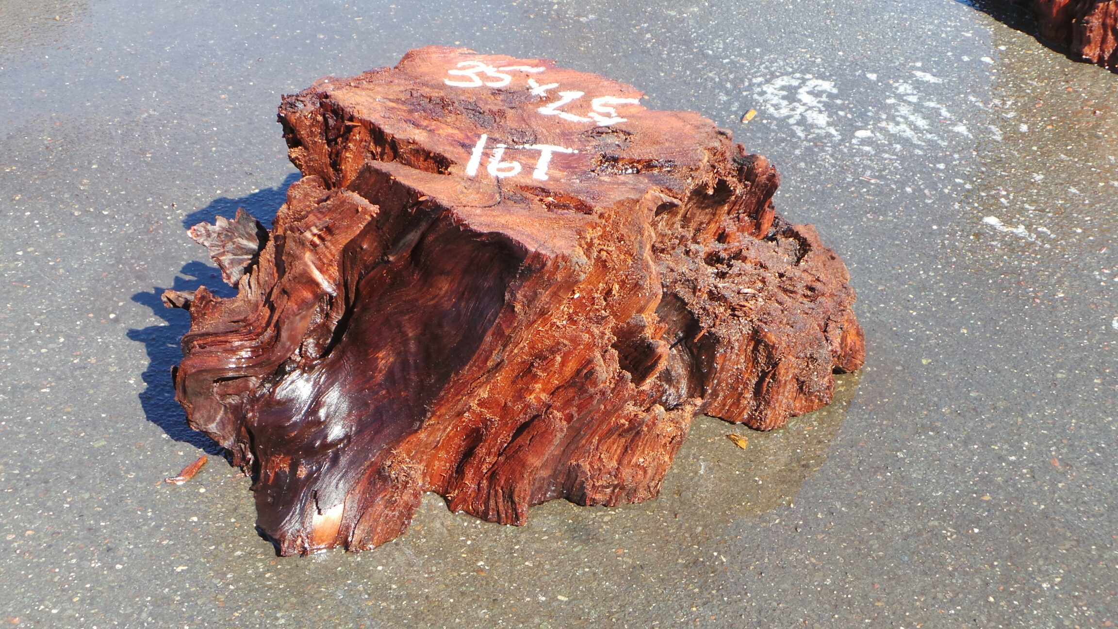 Natural Tree Stump Table - Roots as Table Base