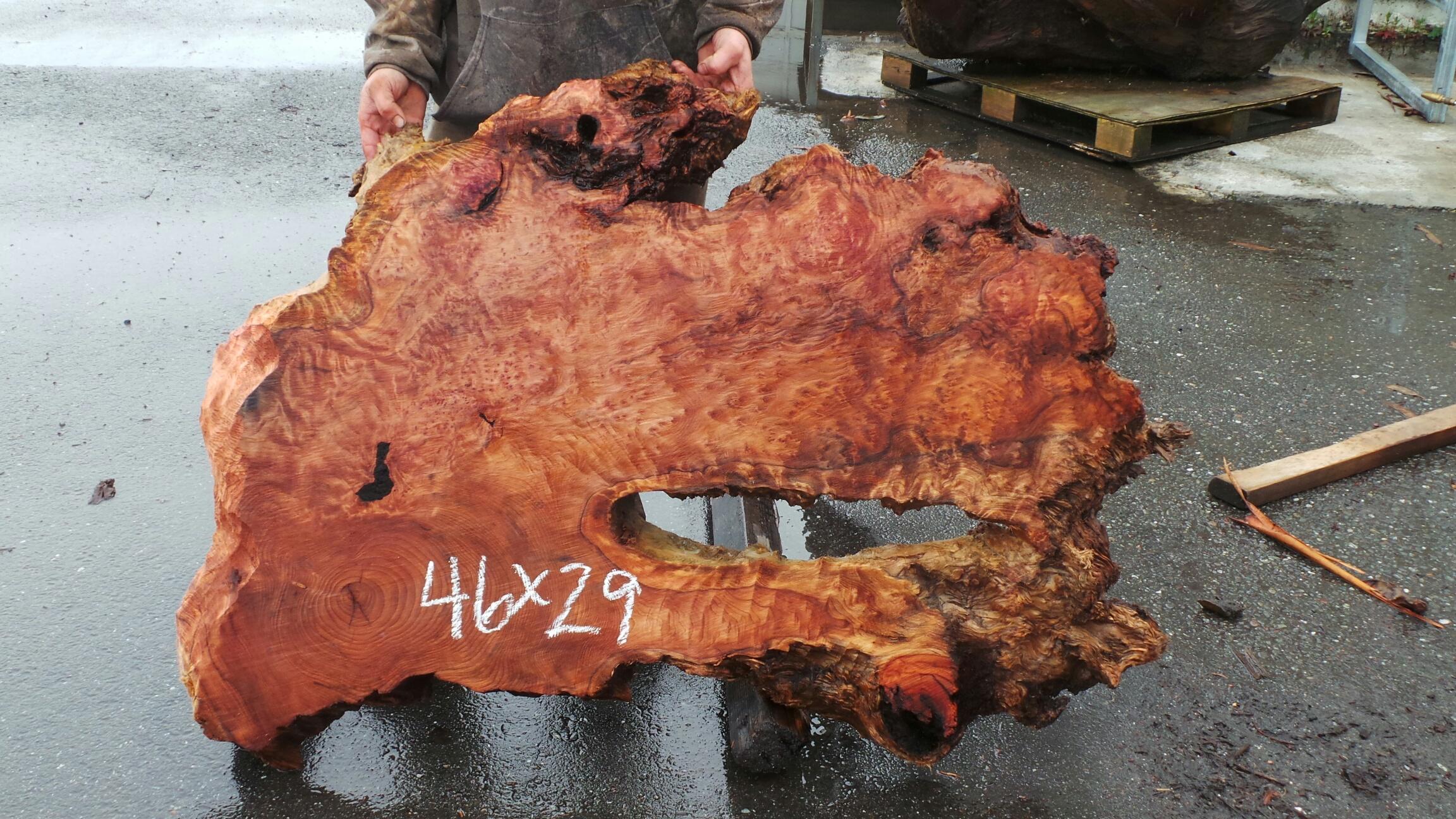 Burly Grain Redwood Burl Slab