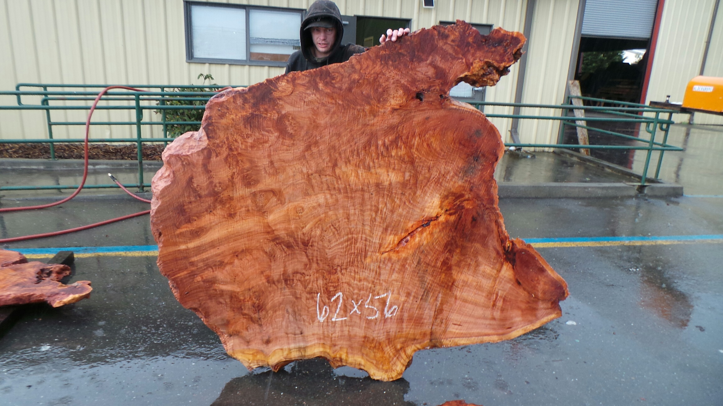 Curly Birdseye Burl Slab from Salvaged California Redwoods