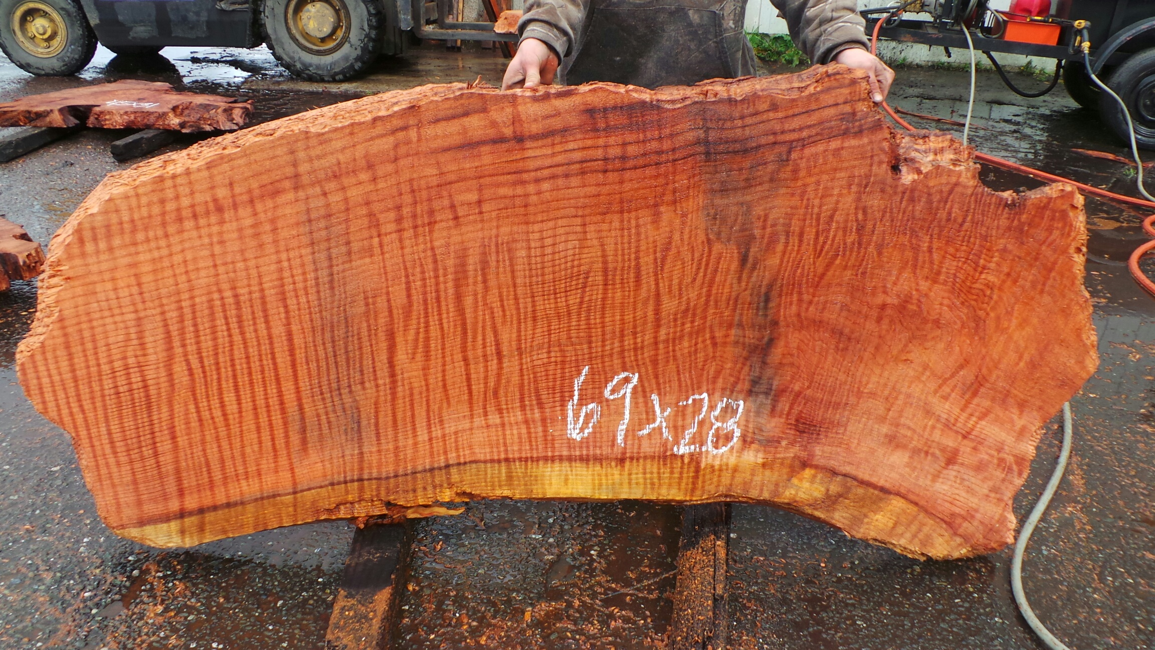 Curly New Growth Redwood Slab