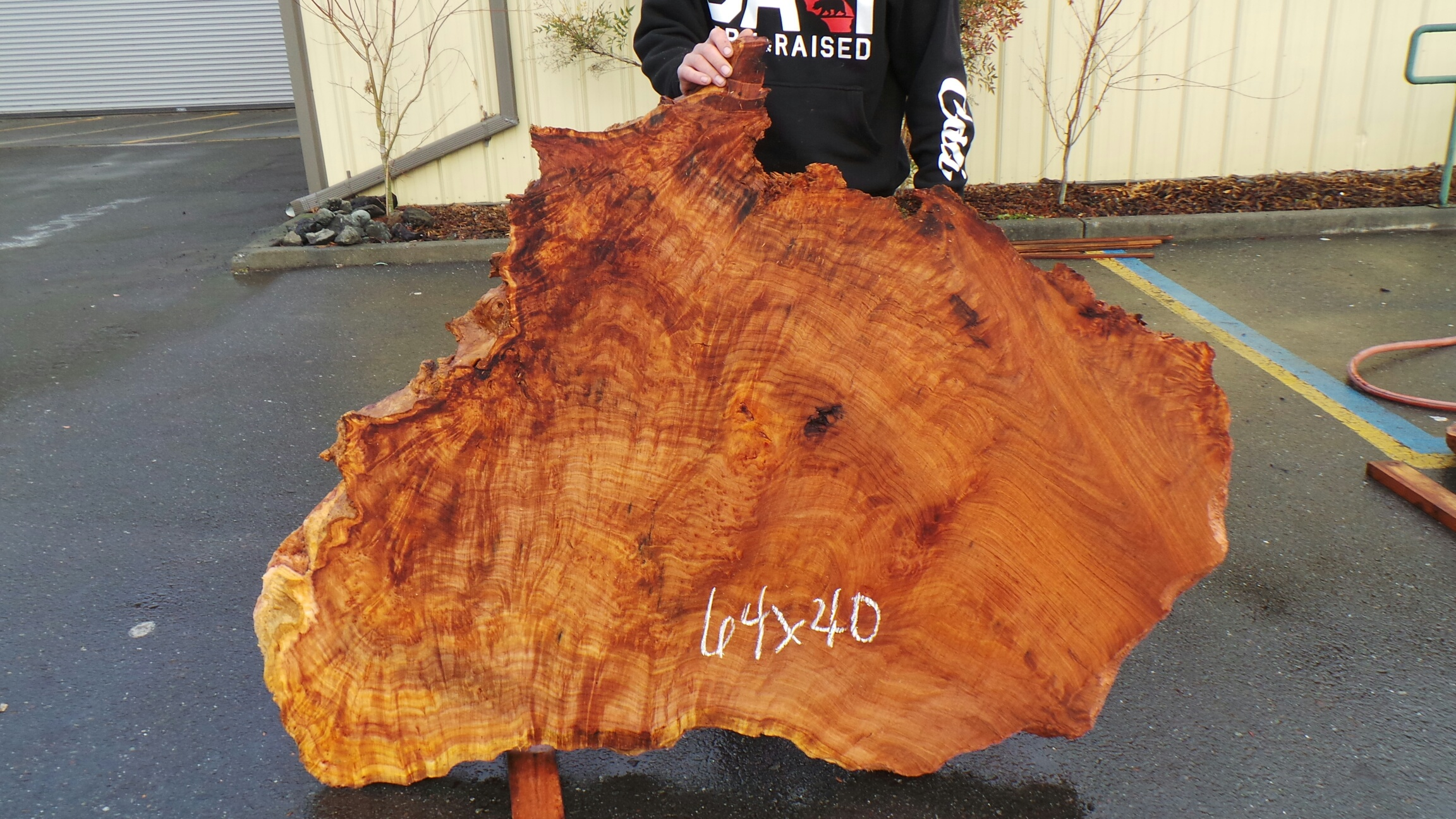 Curly Redwood Live Edge Burl Slab